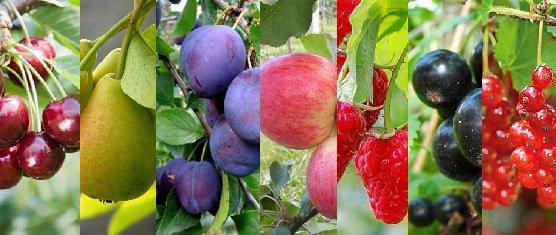 Плодовые и ягодные