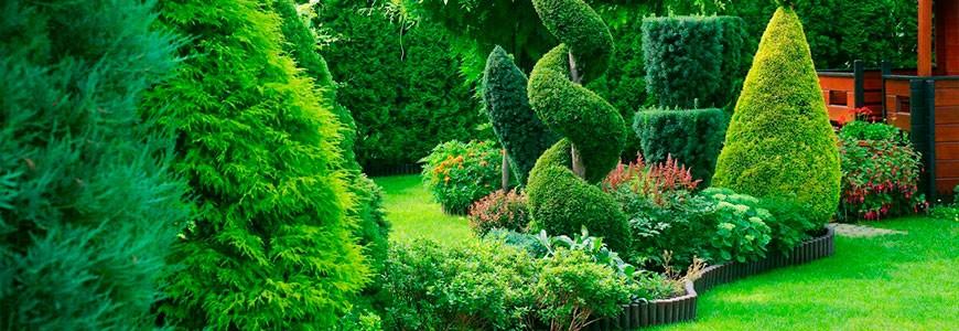 Что можно посадить рядом с туей, какие цветы и растения можно и нельзя сажать поблизости – советы специалистов питомника.